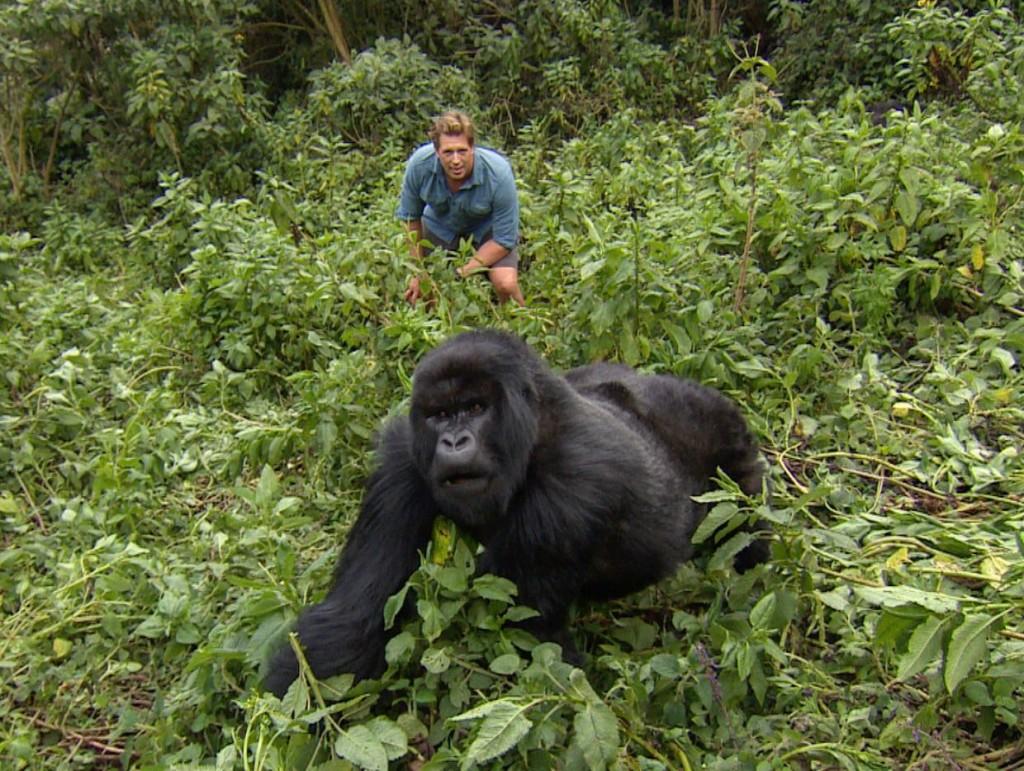 Freek Vonk - Berggorilla - Rwanda 082017